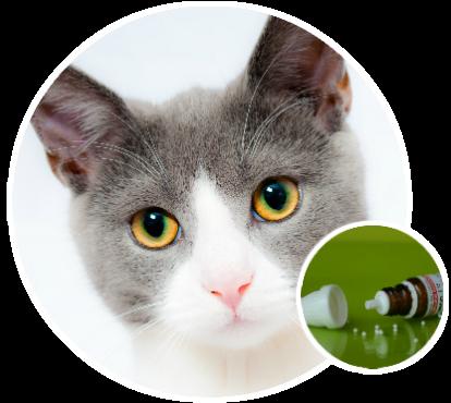 Állatorvoslás szelíden – Homeopátia és természetgyógyászat