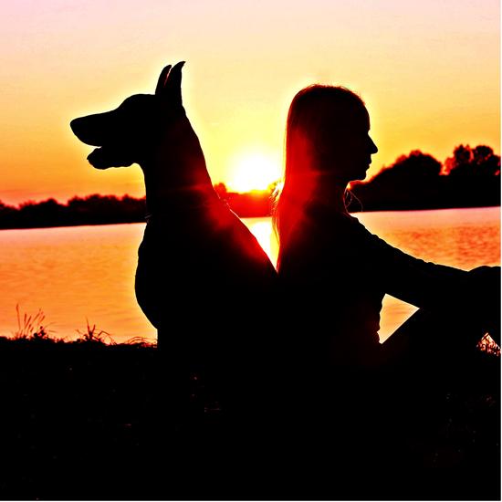 Állatorvoslás szelíden Homeopátia és természetgyógyászat az állatorvos szolgálatában, Állatorvoslás szelíden – Homeopátia és természetgyógyászat